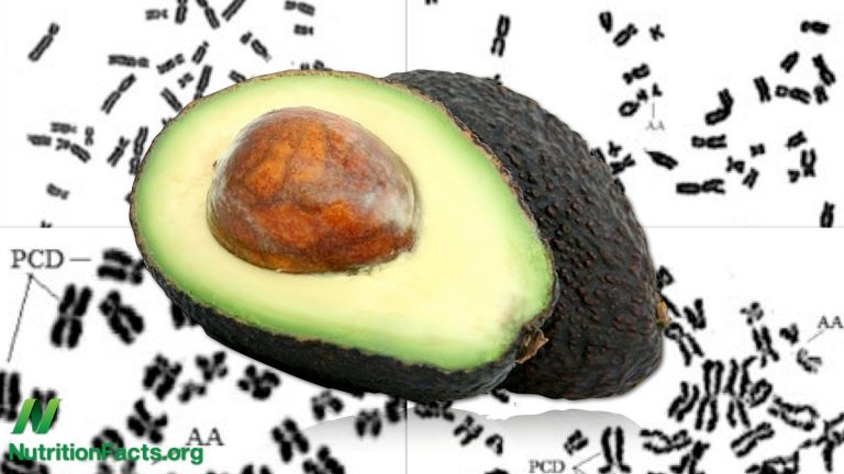 Are Avocados Bad for You?