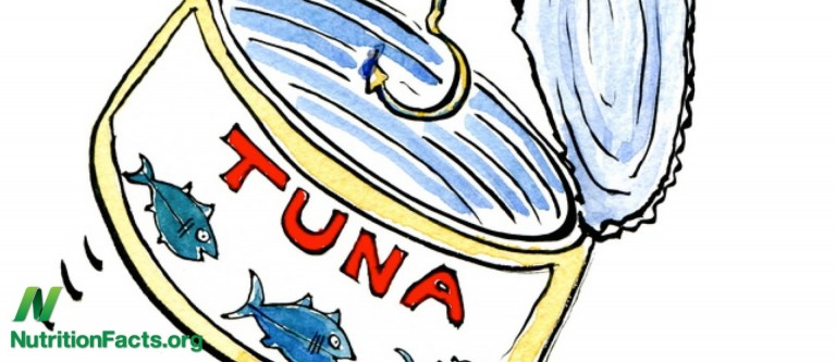NF-Which Brand of Tuna Has the Most Mercury?