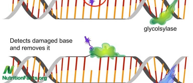 kiwifruit and DNA Repair