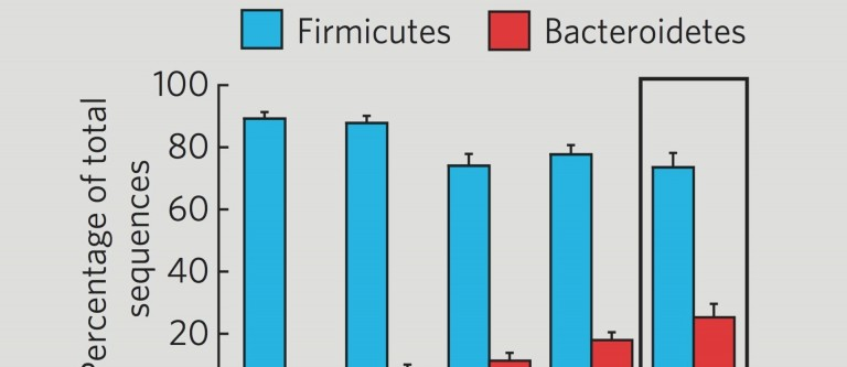 Tipping Firmicutes to Bacteroidetes