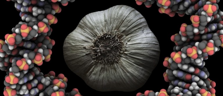 NF-Jan28 Cancer, Interrupted: Garlic