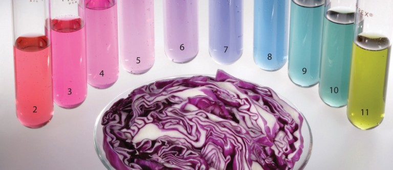 Testing Your Diet with Pee & Purple Cabbage