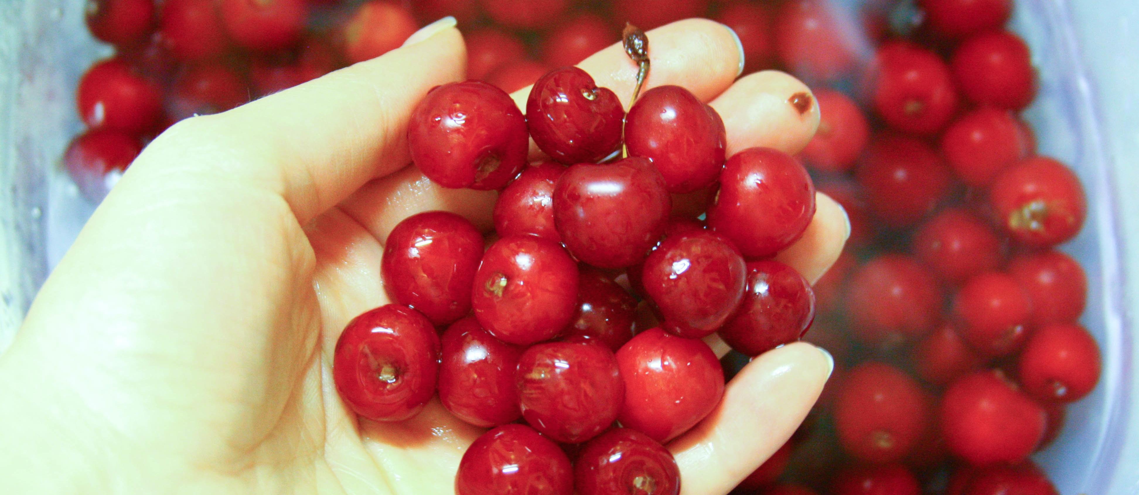 Foods with Natural Melatonin