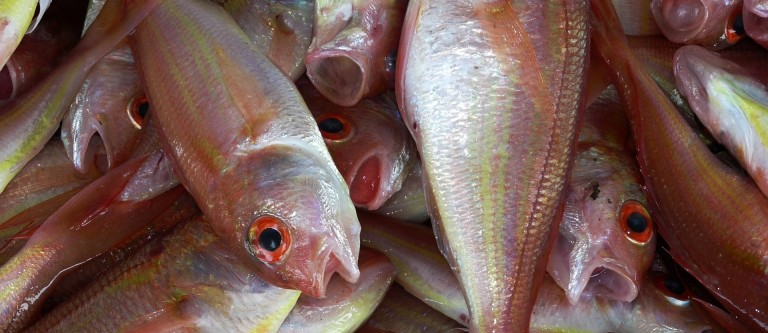Fish and Diabetes